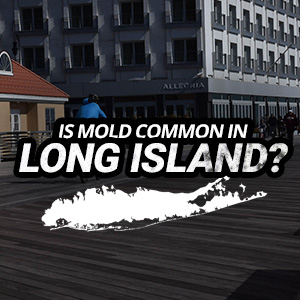 Is Mold Common In Long Island, NY?