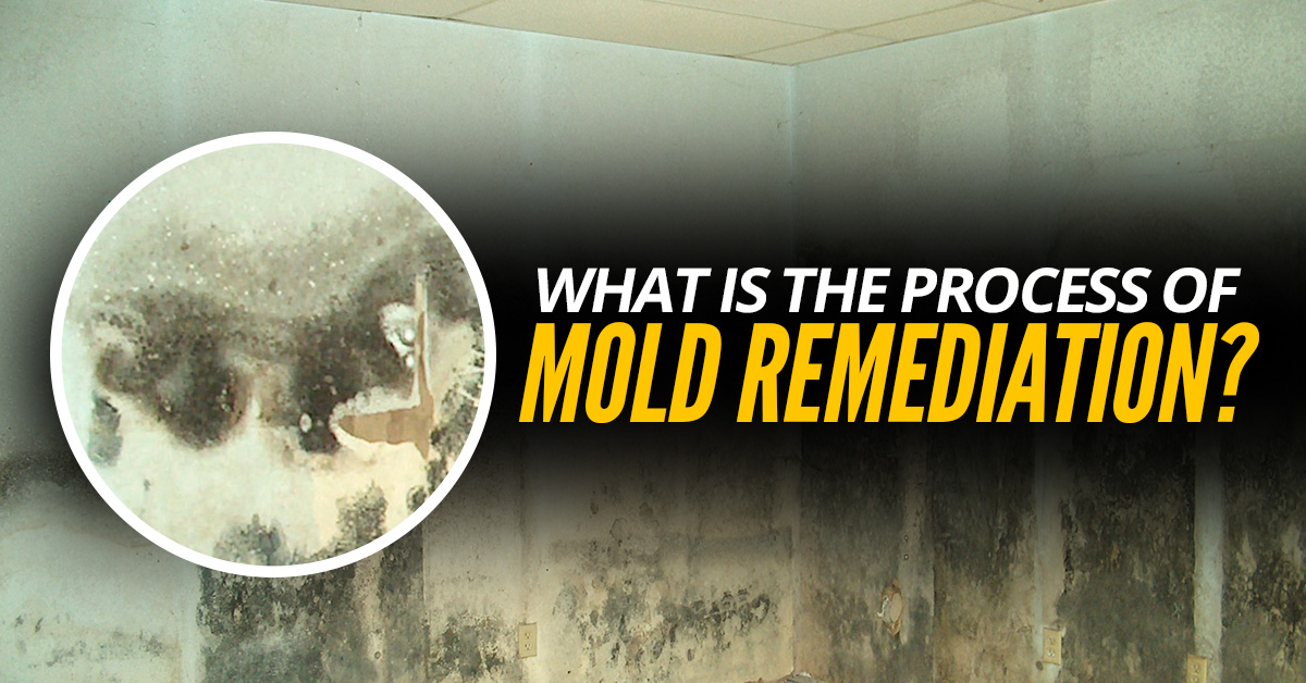 What-Is-The-Process-Of-Mold-Remediation