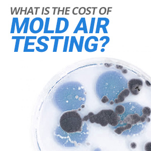 What's The Typical Cost Of Mold Air Testing?