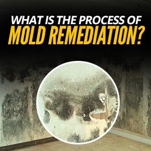 What Is The Process Of Mold Remediation?