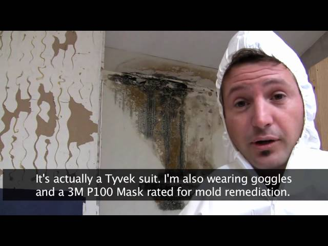Killing Toxic Black Mold – How To Remove Mold Safely