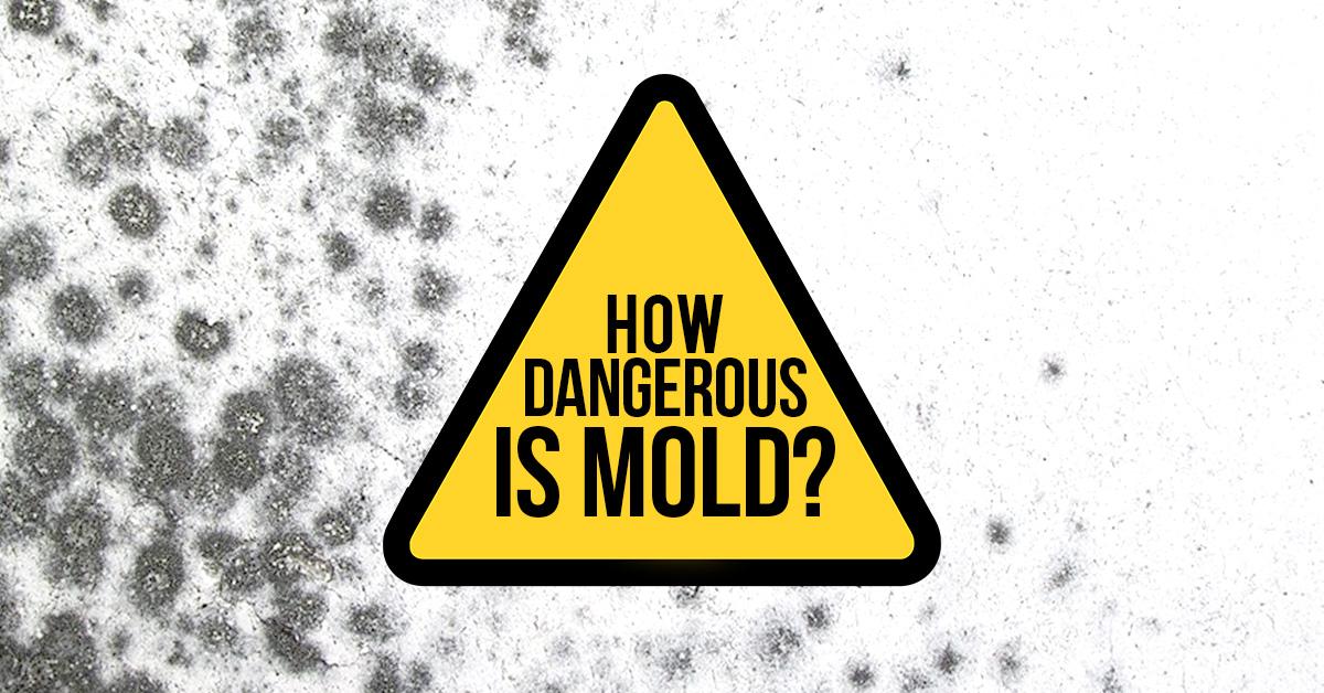 How Dangerous Is Mold