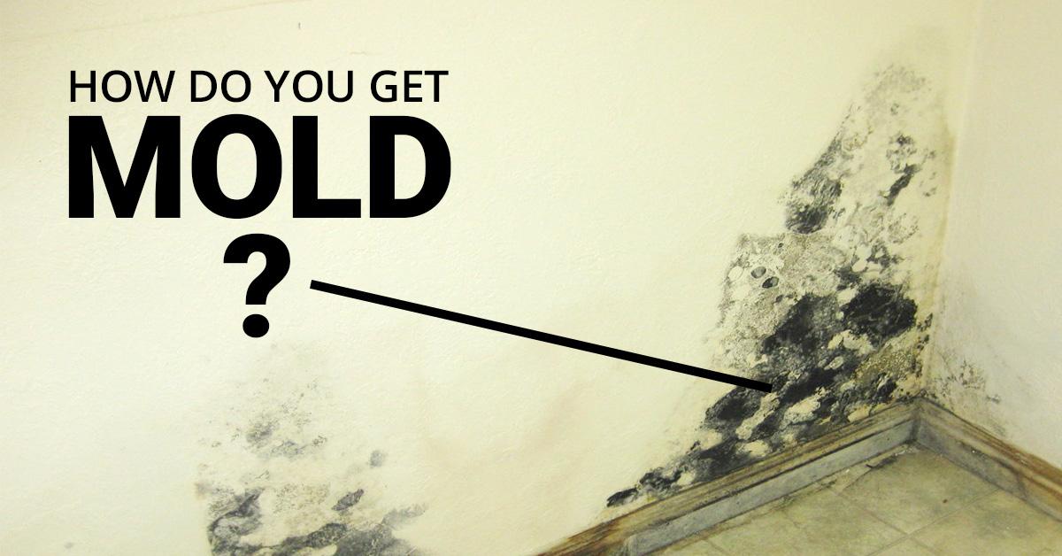 How Do You Get Mold