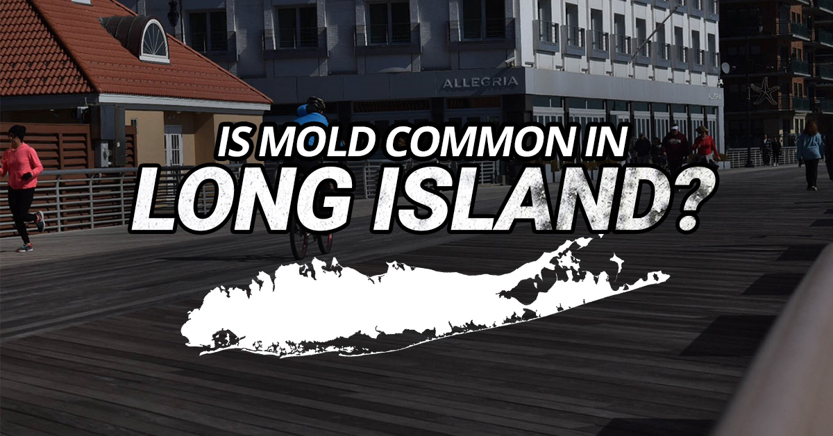 Is Mold Common In Long Island