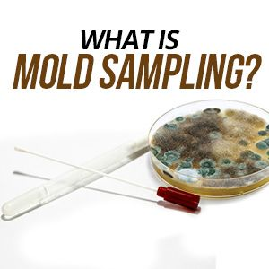 What Is Mold Sampling Used For?