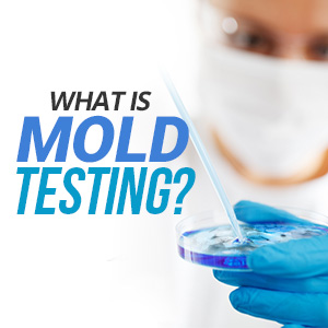 What Is Mold Testing?
