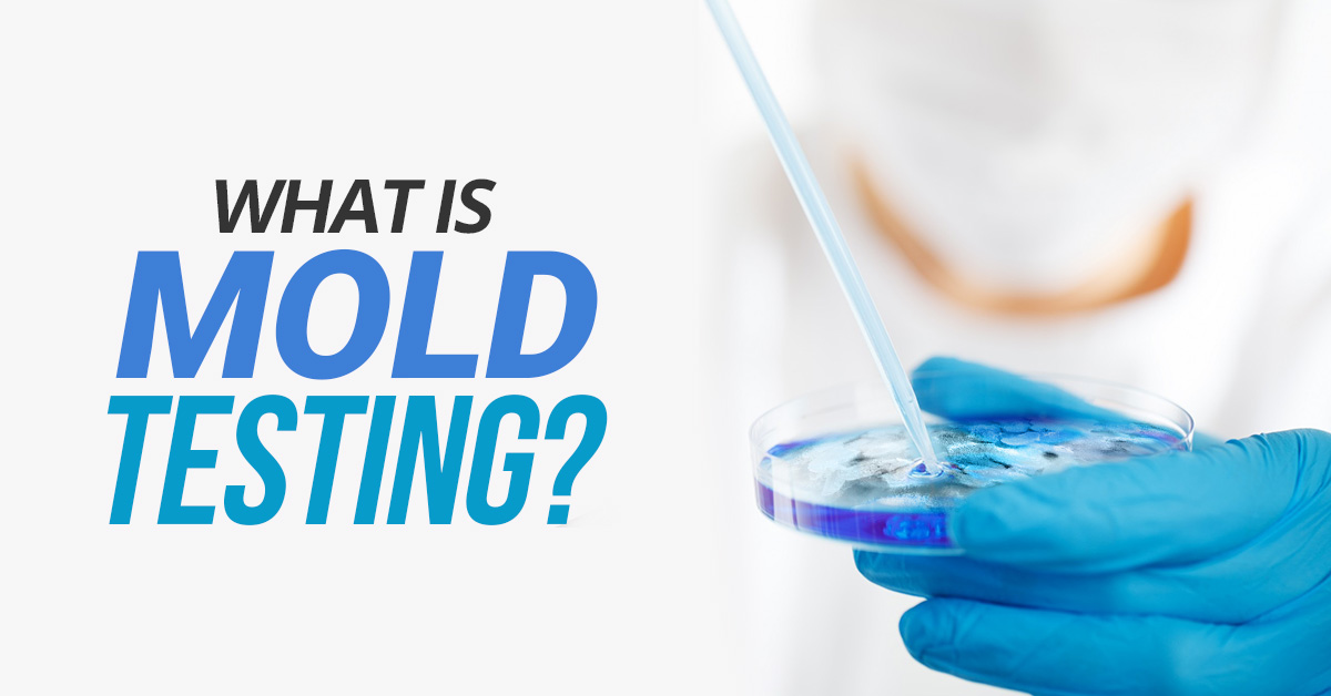 What Is Mold Testing