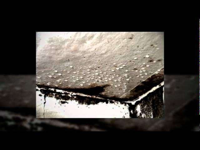 Mold Remediation Company Atlanta