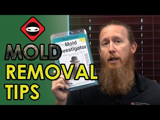 Crawl Space Mold Removal Tips | DIY Mold Remediation Crawl Space