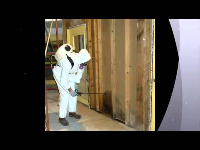 San Diego Mold Remediation 90111 CA