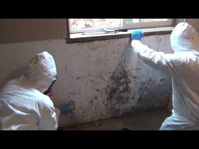 Certified Professional Restoration – Mold Remediation