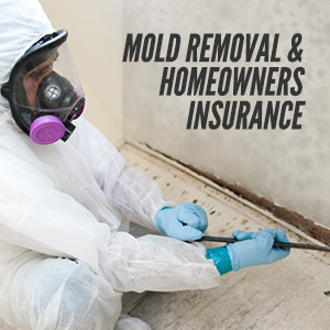 Information On Mold Removal & Homeowners Insurance