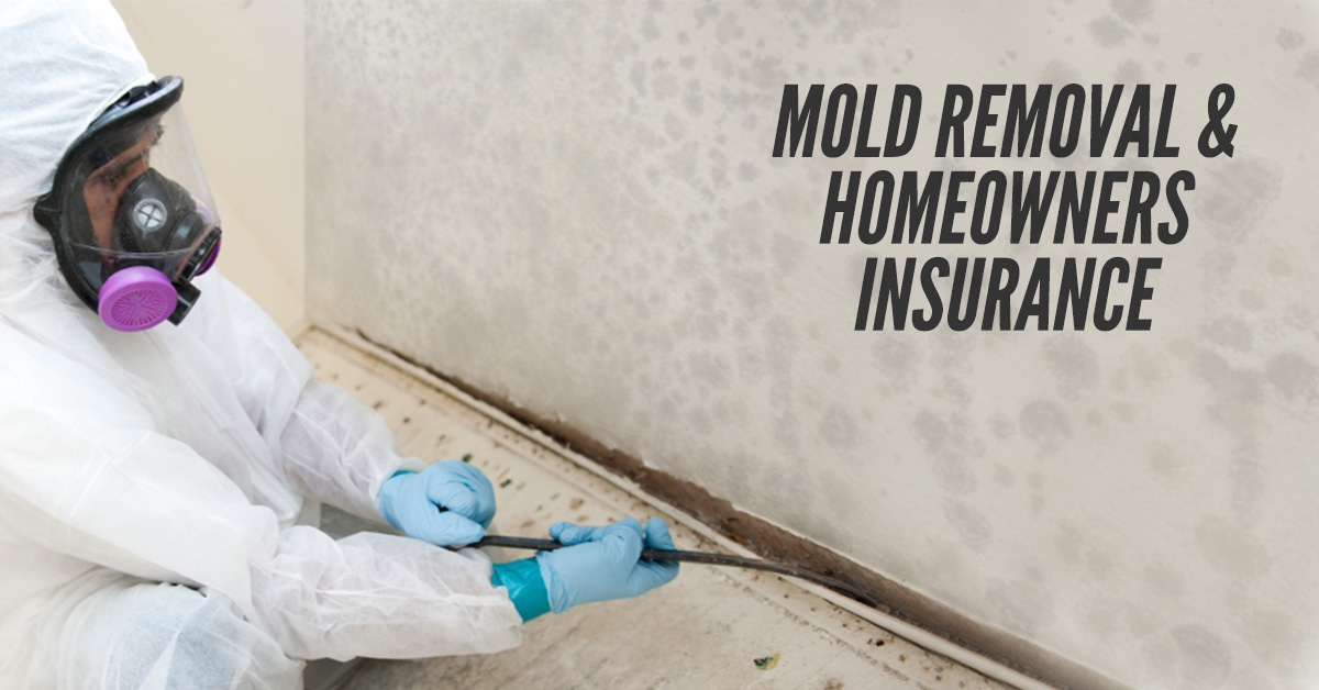 Mold Removal Homeowners Insurance
