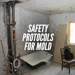 How To Deal With Mold Growth Safely?