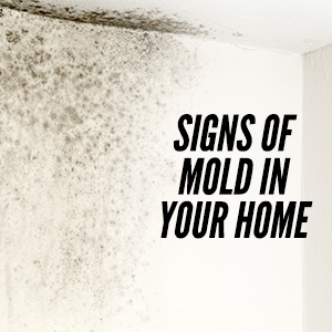Mold Can Cause Damage To Homes And The Health Of Its Residents