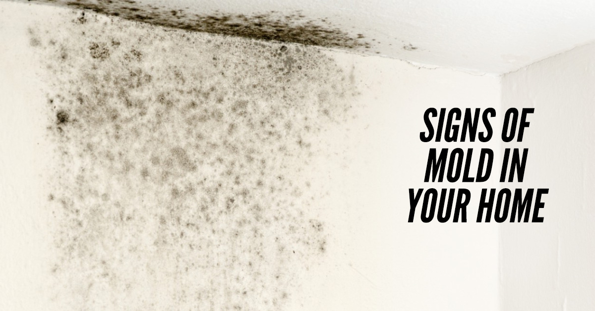 Mold Removal Long Island Ny