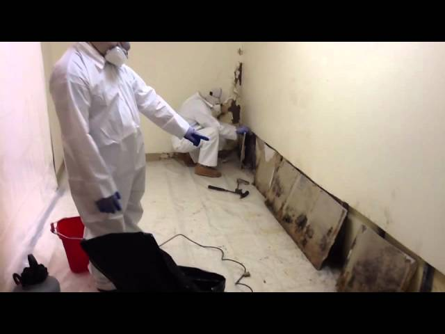 Black Mold Removal – Winston Salem, NC