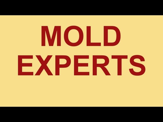 Mold Removal Sarasota | Mold Remediation Sarasota | Mold Growth Example
