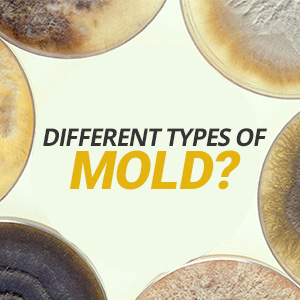 What Are The Different Types Of Mold?