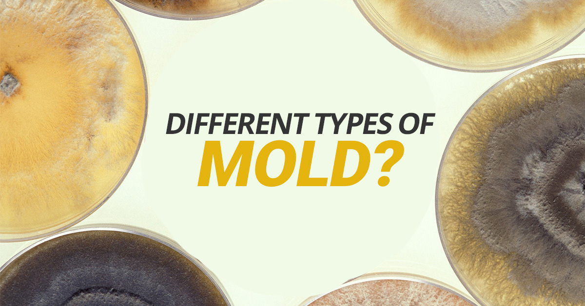 Different-Types-Of-Mold