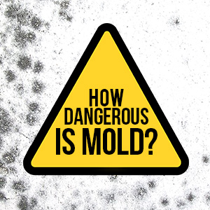 How Dangerous Is Mold?