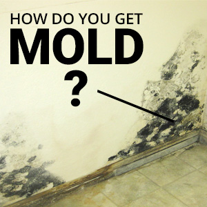 How Do You Get Mold And What Can You Do To Prevent It?