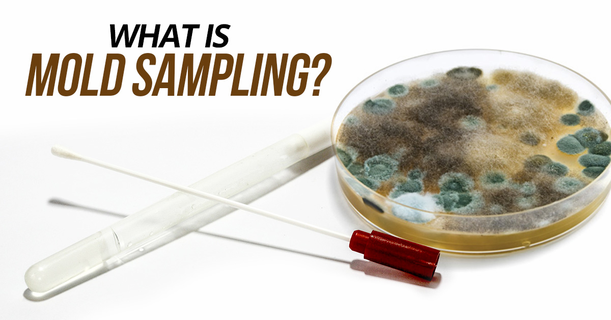 What Is Mold Sampling