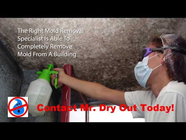 Mold Remediation Brandon 813 425 3355