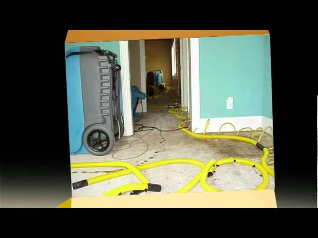 Mold Remediation Companies Atlanta