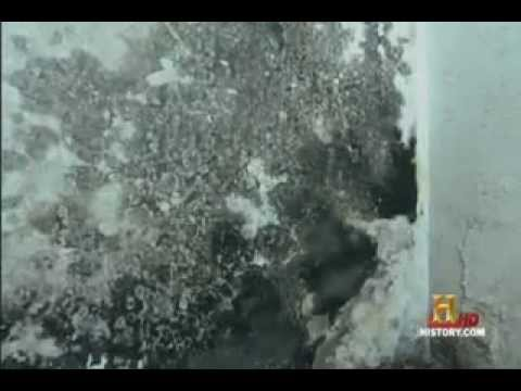 Modern Marvels On Mold Remediation – Call 888-651-2532 – NJ