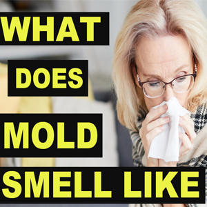 What Does Mold Smell Like? Testing Your Air Quality For Mold